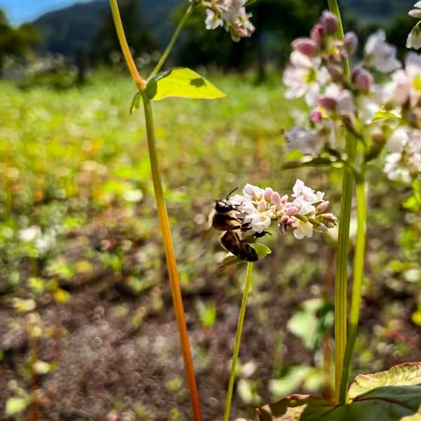 VOLhighspeed Geschichte der Bienen Biene auf Blüte