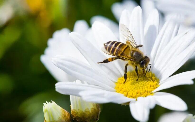 VOLhighspeed Blog Jahr der Biene Beitragsbild
