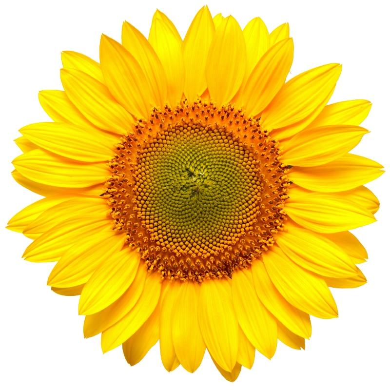 VOLhighspeed Blumeninfo Bienenwiese