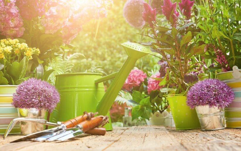 Tipps & Tricks für Bienen-Liebhaber