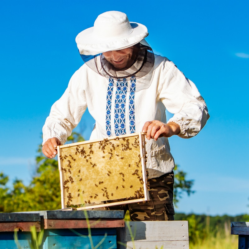 VOLhighspeed Geschichte der Bienen Imker
