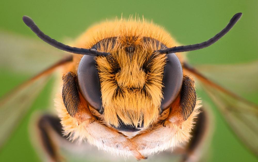 Das Leben aus der Sicht einer Arbeiter-Biene