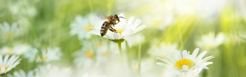 VOLhighspeed Blog Jahr der Bienen