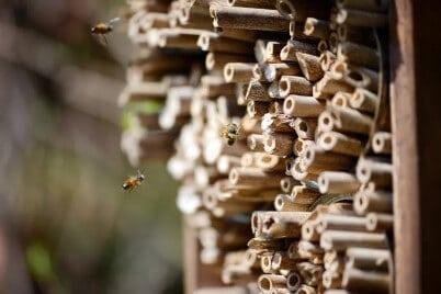 VOLhighspeed Blogbeitrag Insektenhotel