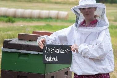 Bienen Krankheiten