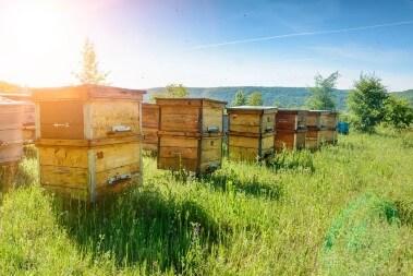 Bienen Massenzucht