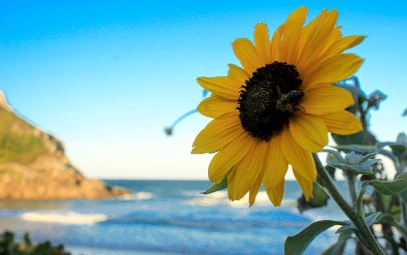 Von einer Biene, die Urlaub machen wollte