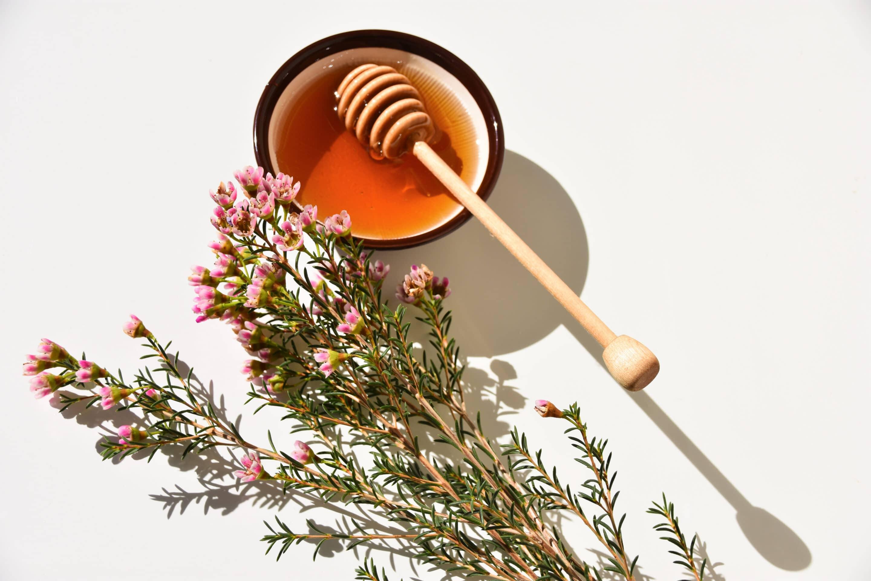 Manuka-Honig aus Neuseeland - ein Wundermittel? 2