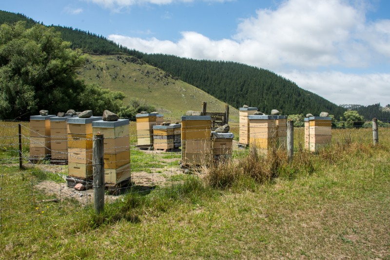Manuka-Honig aus Neuseeland - ein Wundermittel? 1